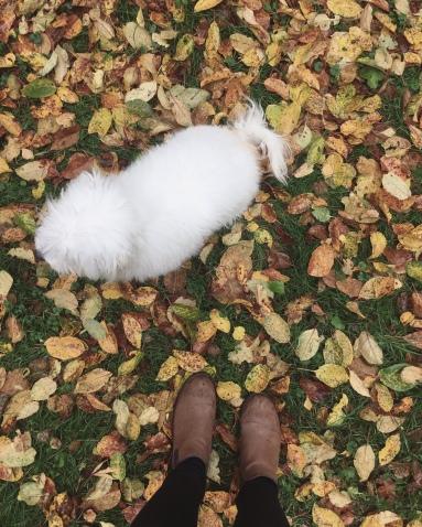 Cottoni ja lehdet.
